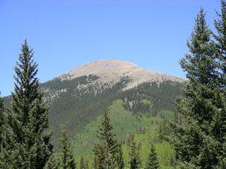 Zen-Forest-Santa-Fe-Baldy